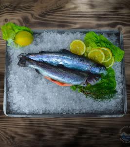 Pstruh lososový – kuchaný